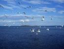 pelican-lake01
